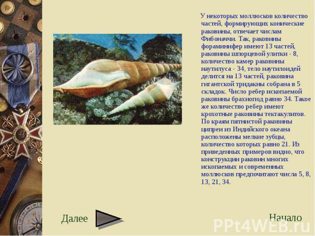 У некоторых моллюсков количество частей, формирующих конические раковины, отвечает числам Фибоначчи. Так, раковины фораминифер имеют 13 частей, раковины шпорцевой улитки - 8, количество камер раковины наутилуса - 34, тело наутилоидей делится на 13 ч…