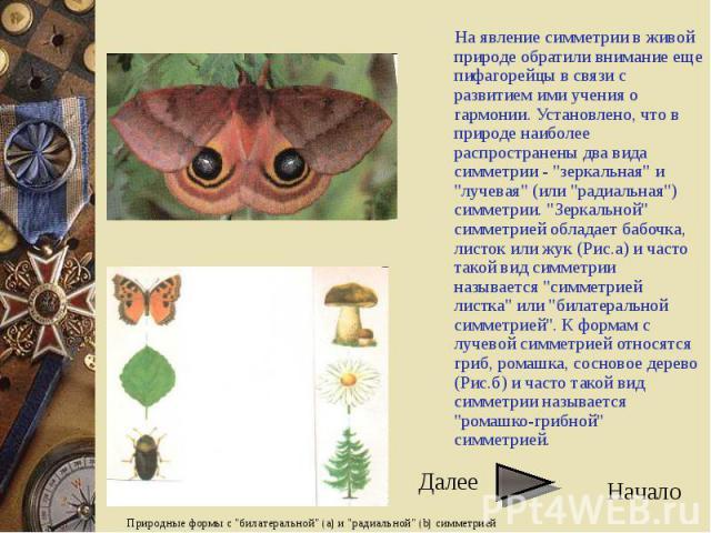 """На явление симметрии в живой природе обратили внимание еще пифагорейцы в связи с развитием ими учения о гармонии. Установлено, что в природе наиболее распространены два вида симметрии - """"зеркальная"""" и """"лучевая"""" (или """"радиаль…"""