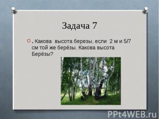 . Какова высота березы, если 2 м и 5/7 см той же берёзы. Какова высота Берёзы? .