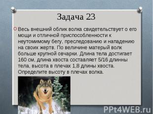 Весь внешний облик волка свидетельствует о его мощи и отличной приспособленности