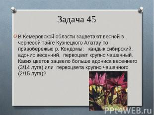 В Кемеровской области зацветают весной в черневой тайге Кузнецкого Алатау по пра