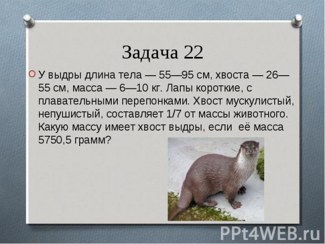 У выдры длина тела— 55—95см, хвоста— 26—55см, масса— 6—10кг. Лапы короткие, с плавательными перепонками. Хвост мускулистый, непушистый, составляет 1/7 от массы животного. Какую массу имеет хвост выдры, если её мас…