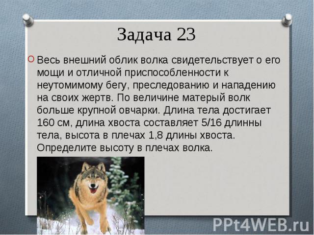 Весь внешний облик волка свидетельствует о его мощи и отличной приспособленности к неутомимому бегу, преследованию и нападению на своих жертв. По величине матерый волк больше крупной овчарки. Длина тела достигает 160 см, длина хвоста составляет 5/16…