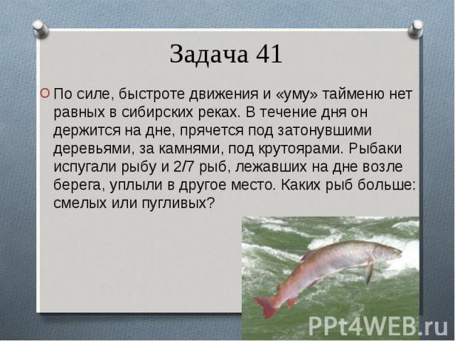 По силе, быстроте движения и «уму» тайменю нет равных в сибирских реках. В течение дня он держится на дне, прячется под затонувшими деревьями, за камнями, под крутоярами. Рыбаки испугали рыбу и 2/7 рыб, лежавших на дне возле берега, уплыли в другое …