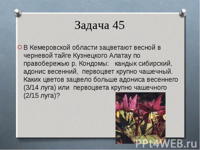 В Кемеровской области зацветают весной в черневой тайге Кузнецкого Алатау по правобережью р. Кондомы: кандык сибирский, адонис весенний, первоцвет крупно чашечный. Каких цветов зацвело больше адониса весеннего (3/14 луга) или первоцвета крупно чашеч…