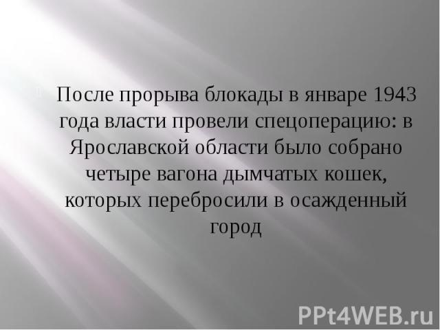 После прорыва блокады в январе 1943 года власти провели спецоперацию: в Ярославской области было собрано четыре вагона дымчатых кошек, которых перебросили в осажденный город После прорыва блокады в январе 1943 года власти провели спецоперацию: в Яро…