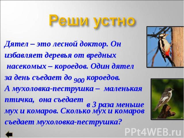 Дятел – это лесной доктор. Он Дятел – это лесной доктор. Он избавляет деревья от вредных насекомых – короедов. Один дятел за день съедает до короедов. А мухоловка-пеструшка – маленькая птичка, она съедает мух и комаров. Сколько мух и комаров съедает…