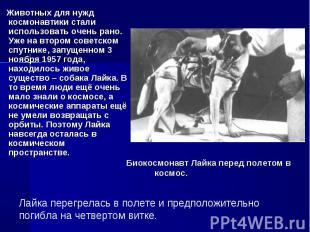 Животных для нужд космонавтики стали использовать очень рано. Уже на втором сове