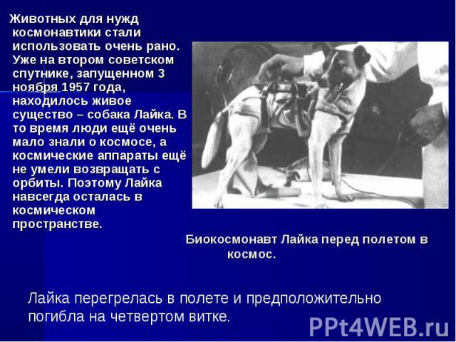 Животных для нужд космонавтики стали использовать очень рано. Уже на втором советском спутнике, запущенном 3 ноября 1957 года, находилось живое существо – собака Лайка. В то время люди ещё очень мало знали о космосе, а космические аппараты ещё не ум…