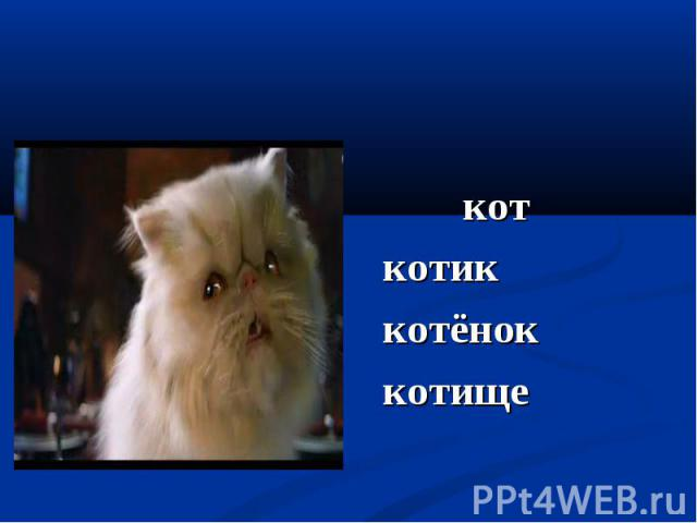 кот кот котик котёнок котище