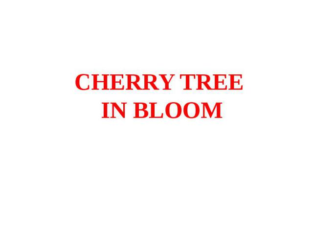 CHERRY TREE IN BLOOM