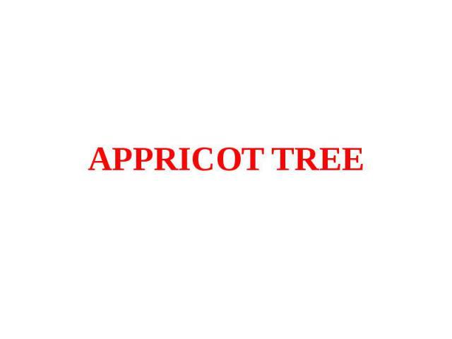 APPRICOT TREE