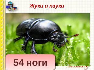 Вопрос: сколько ног у жука? Вопрос: сколько ног у жука? Сколько ног у паука? У м