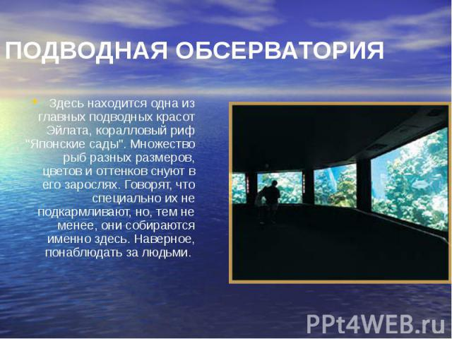 """ПОДВОДНАЯ ОБСЕРВАТОРИЯ Здесь находится одна из главных подводных красот Эйлата, коралловый риф """"Японские сады"""". Множество рыб разных размеров, цветов и оттенков снуют в его зарослях. Говорят, что специально их не подкармливают, но, тем не …"""