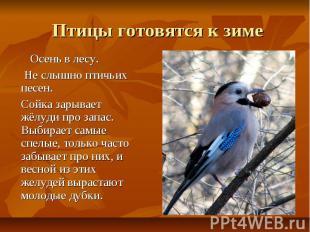 Птицы готовятся к зиме Осень в лесу. Не слышно птичьих песен. Сойка зарывает жёл