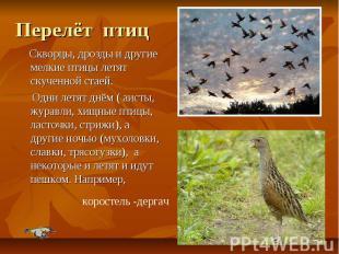 Перелёт птиц Скворцы, дрозды и другие мелкие птицы летят скученной стаей. Одни л