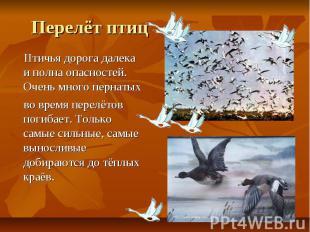 Перелёт птиц Птичья дорога далека и полна опасностей. Очень много пернатых во вр