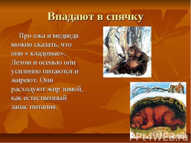 Впадают в спячку Про ежа и медведя можно сказать, что они « кладовые». Летом и осенью они усиленно питаются и жиреют. Они расходуют жир зимой, как естественный запас питания.