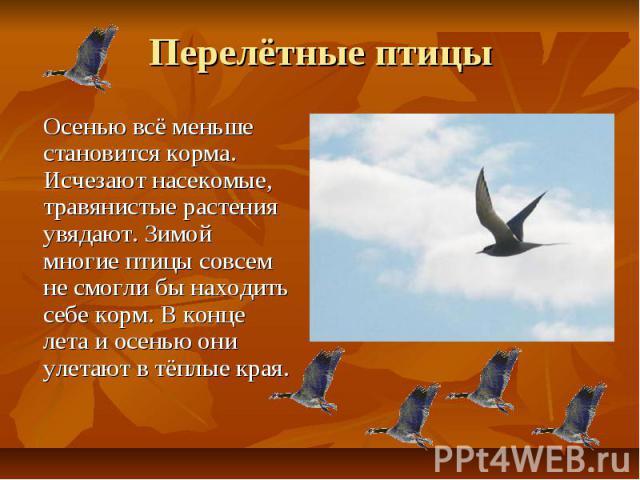 Перелётные птицы Осенью всё меньше становится корма. Исчезают насекомые, травянистые растения увядают. Зимой многие птицы совсем не смогли бы находить себе корм. В конце лета и осенью они улетают в тёплые края.