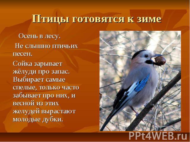 Птицы готовятся к зиме Осень в лесу. Не слышно птичьих песен. Сойка зарывает жёлуди про запас. Выбирает самые спелые, только часто забывает про них, и весной из этих желудей вырастают молодые дубки.