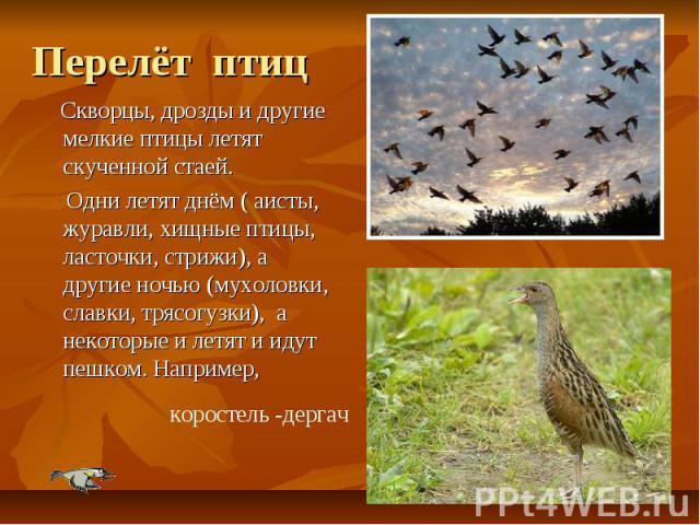 Перелёт птиц Скворцы, дрозды и другие мелкие птицы летят скученной стаей. Одни летят днём ( аисты, журавли, хищные птицы, ласточки, стрижи), а другие ночью (мухоловки, славки, трясогузки), а некоторые и летят и идут пешком. Например,