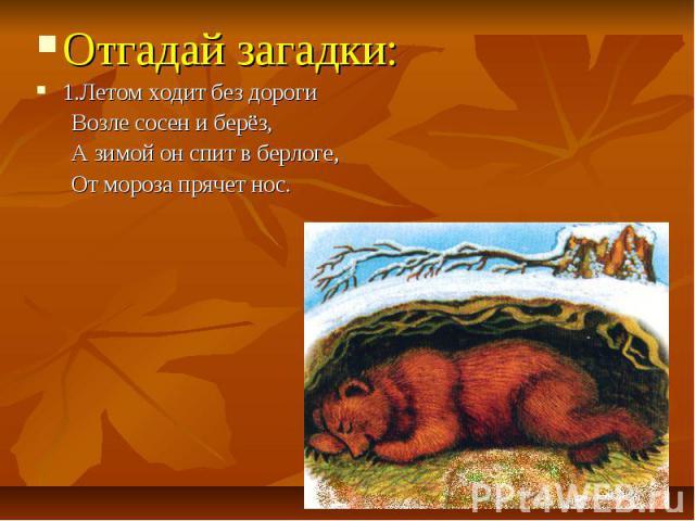 Отгадай загадки: Отгадай загадки: 1.Летом ходит без дороги Возле сосен и берёз, А зимой он спит в берлоге, От мороза прячет нос.