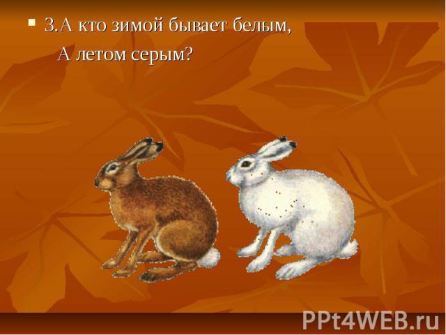 3.А кто зимой бывает белым, 3.А кто зимой бывает белым, А летом серым?