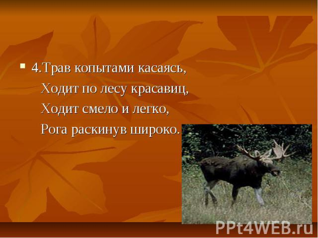 4.Трав копытами касаясь, Ходит по лесу красавиц, Ходит смело и легко, Рога раскинув широко.