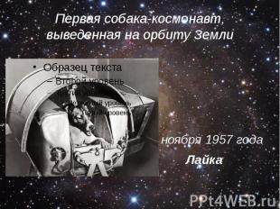 Первая собака-космонавт, выведенная на орбиту Земли 1 ноября 1957 года Лайка