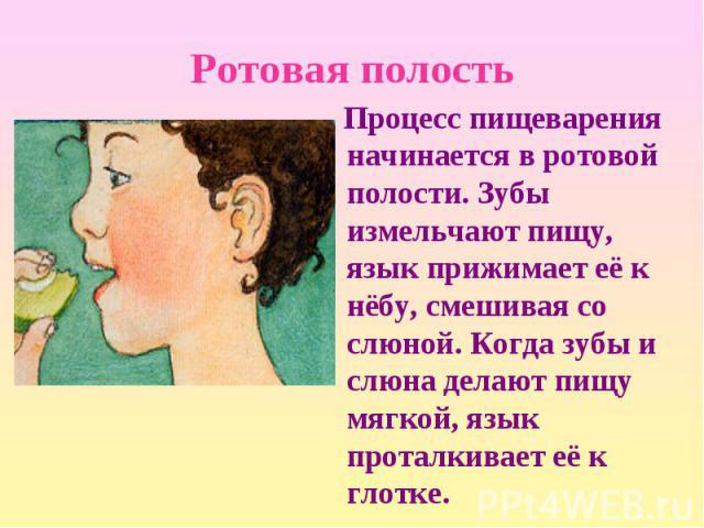 Процесс пищеварения начинается в ротовой полости. Зубы измельчают пищу, язык прижимает её к нёбу, смешивая со слюной. Когда зубы и слюна делают пищу мягкой, язык проталкивает её к глотке. Процесс пищеварения начинается в ротовой полости. Зубы измель…