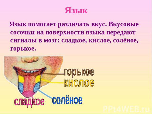 Язык помогает различать вкус. Вкусовые сосочки на поверхности языка передают сигналы в мозг: сладкое, кислое, солёное, горькое. Язык помогает различать вкус. Вкусовые сосочки на поверхности языка передают сигналы в мозг: сладкое, кислое, солёное, горькое.