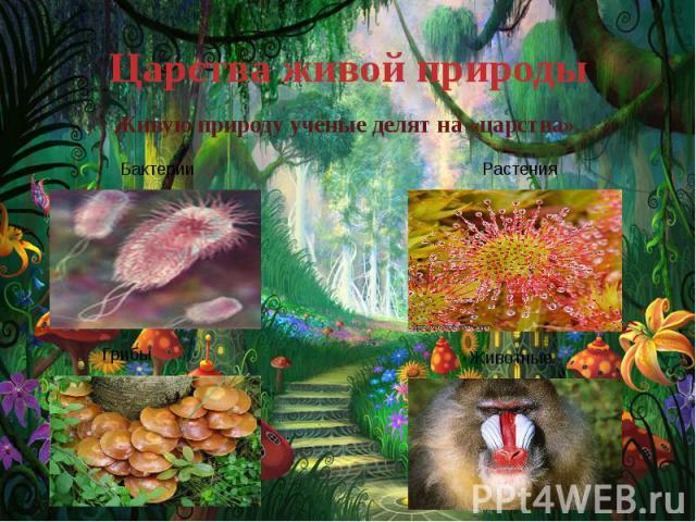 Царства живой природы Живую природу ученые делят на «царства».