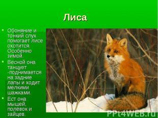 Обоняние и тонкий слух помогает лисе охотится. Особенно зимой. Обоняние и тонкий