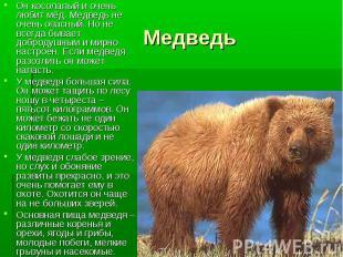 Он косолапый и очень любит мёд. Медведь не очень опасный. Но не всегда бывает до