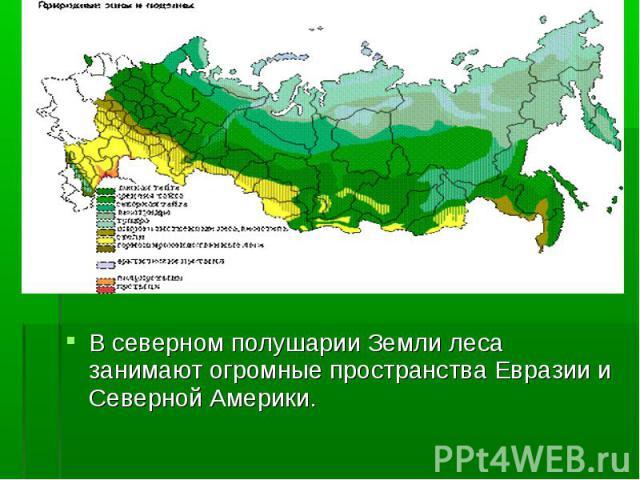 В северном полушарии Земли леса занимают огромные пространства Евразии и Северной Америки. В северном полушарии Земли леса занимают огромные пространства Евразии и Северной Америки.