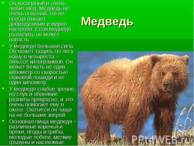 Он косолапый и очень любит мёд. Медведь не очень опасный. Но не всегда бывает добродушным и мирно настроен. Если медведя разозлить он может напасть. Он косолапый и очень любит мёд. Медведь не очень опасный. Но не всегда бывает добродушным и мирно на…
