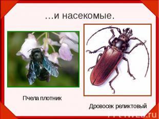 …и насекомые.