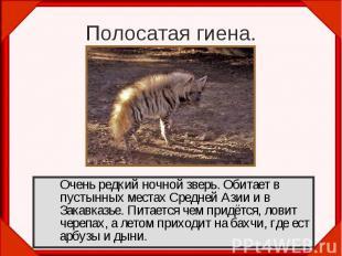 Полосатая гиена. Очень редкий ночной зверь. Обитает в пустынных местах Средней А