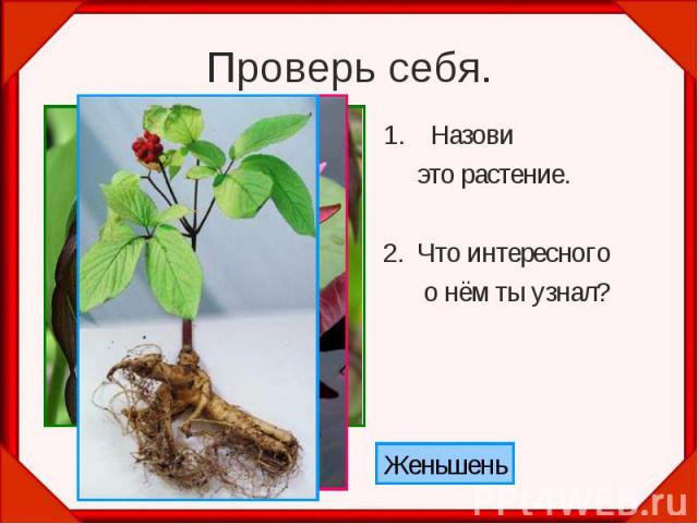 Проверь себя. Назови это растение. 2. Что интересного о нём ты узнал?