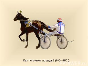 Как погоняют лошадь? (НО –НО!)