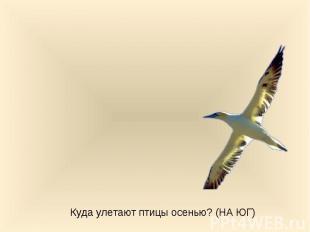 Куда улетают птицы осенью? (НА ЮГ)