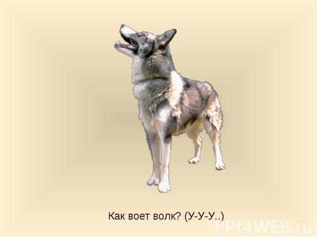 Как воет волк? (У-У-У..)