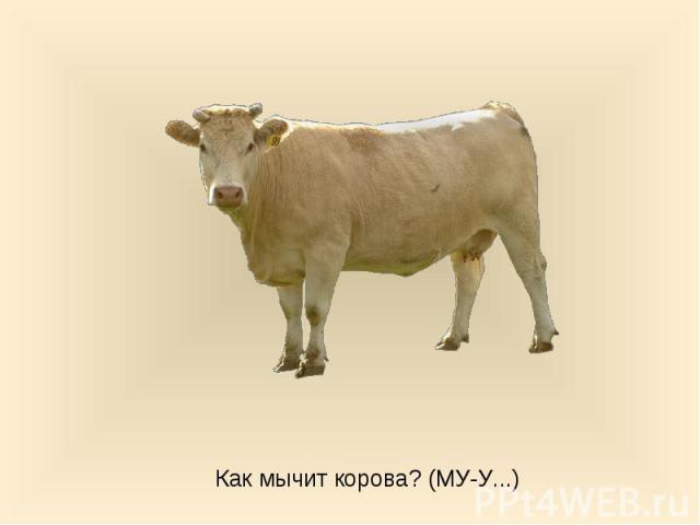Как мычит корова? (МУ-У...)