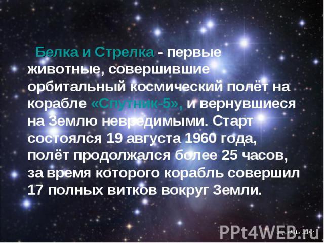 Белка и Стрелка - первые животные, совершившие орбитальный космический полёт на корабле «Спутник-5», и вернувшиеся на Землю невредимыми. Старт состоялся 19 августа 1960 года, полёт продолжался более 25 часов, за время которого корабль совершил 17 по…