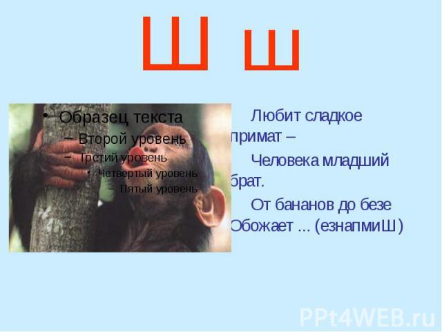 Ш ш Любит сладкое примат – Человека младший брат. От бананов до безе Обожает ... (езнапмиШ)
