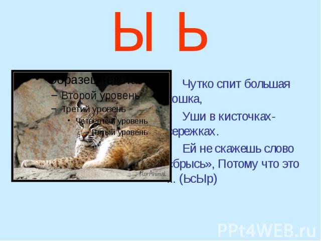 Ы Ь Чутко спит большая кошка, Уши в кисточках-сережках. Ей не скажешь слово «брысь», Потому что это ... (ЬсЫр)