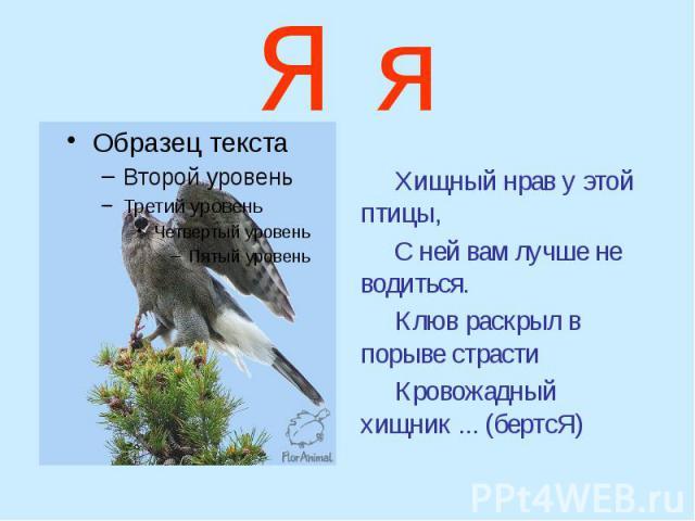 Я я Хищный нрав у этой птицы, С ней вам лучше не водиться. Клюв раскрыл в порыве страсти Кровожадный хищник ... (бертсЯ)