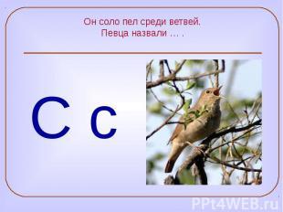 Он соло пел среди ветвей. Певца назвали … .