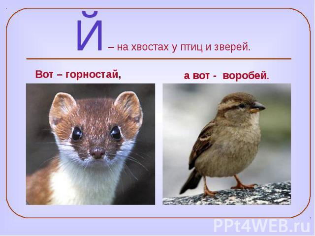 Й – на хвостах у птиц и зверей.
