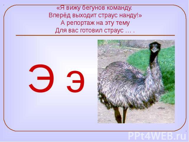 «Я вижу бегунов команду. Вперёд выходит страус нанду!» А репортаж на эту тему Для вас готовил страус … .
